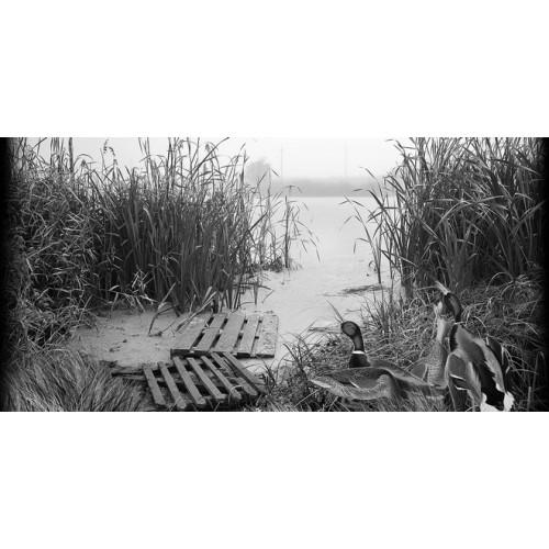 Пейзаж 17