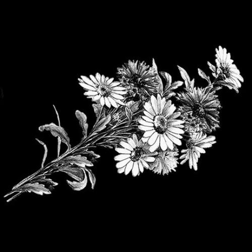 Цветок 14
